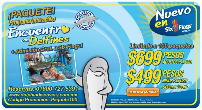 Six Flags encuentro con delfines